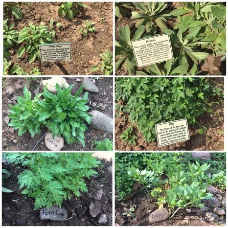 Sites Homestead Herb Garden